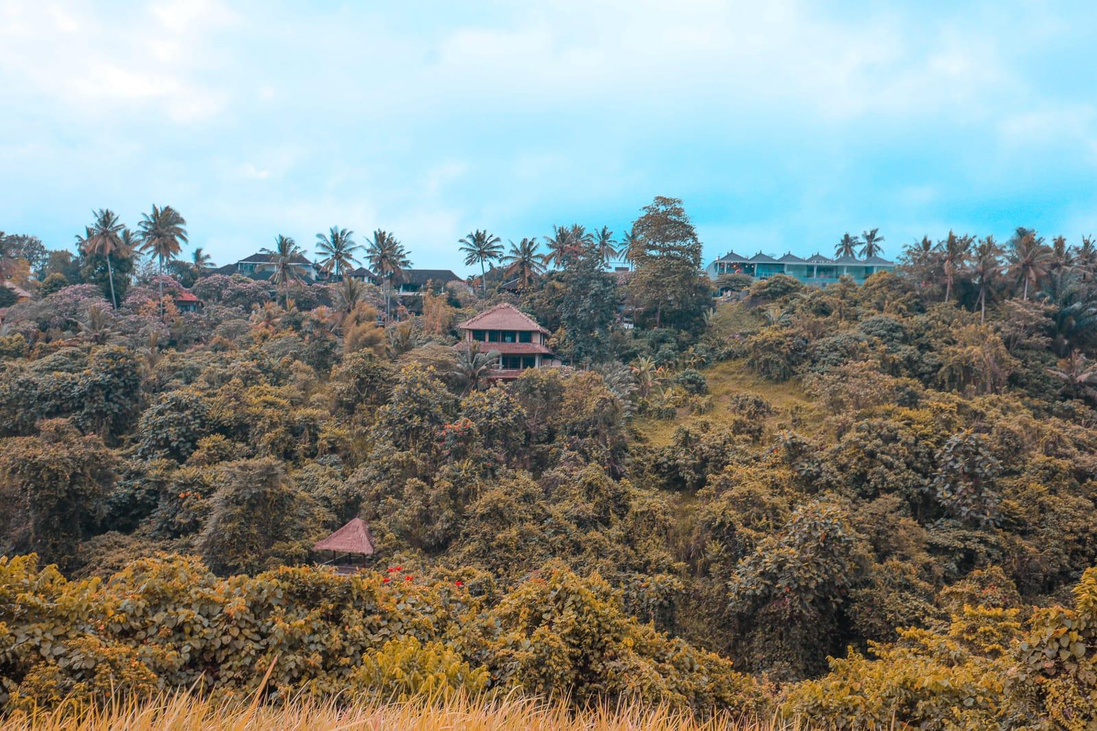 Arrival In Bali + The Campuhan Ridge Walk In Ubud (26)
