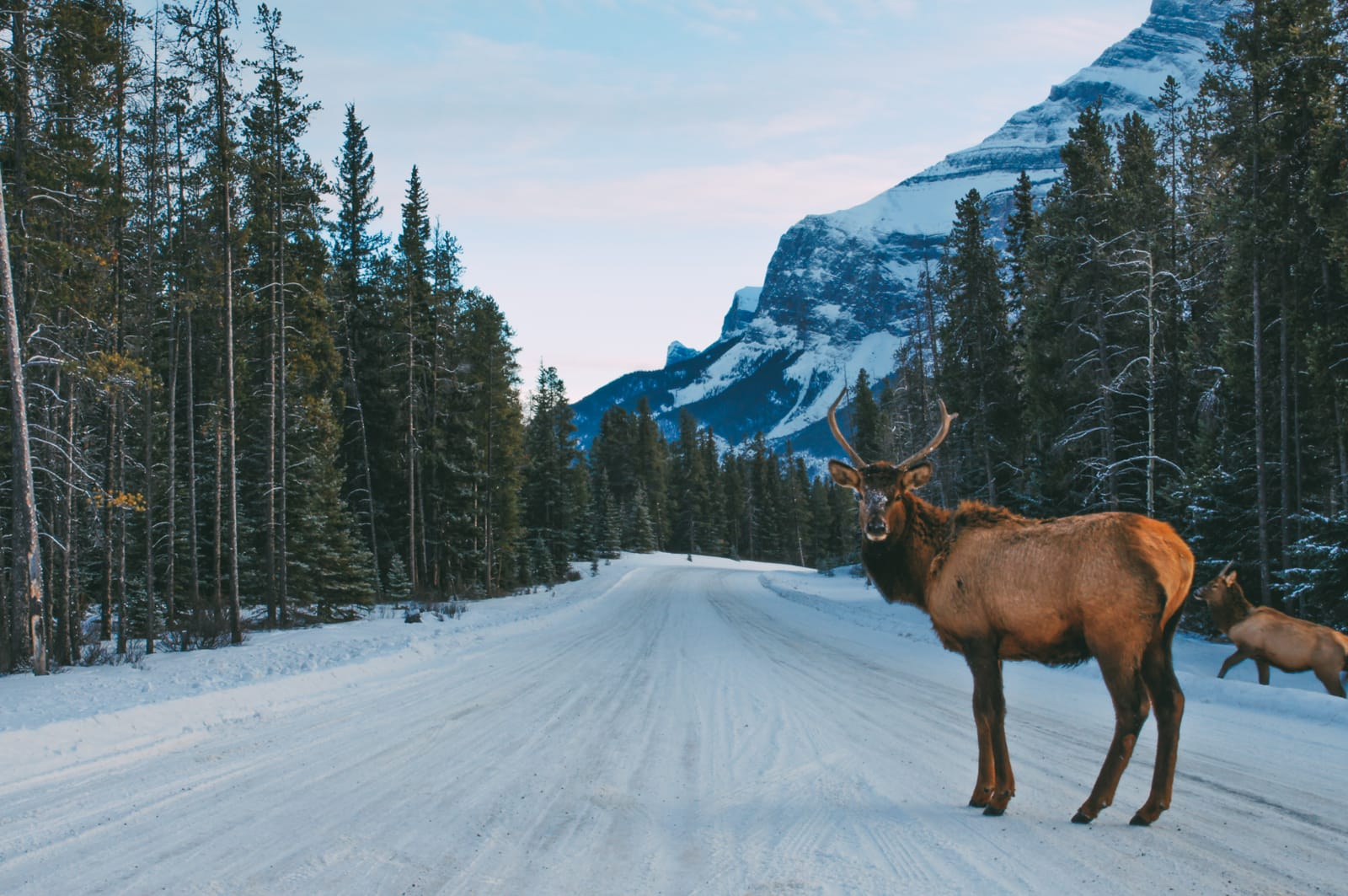 17 Beautiful Things To Do In Alberta - Your Must See Guide (7)