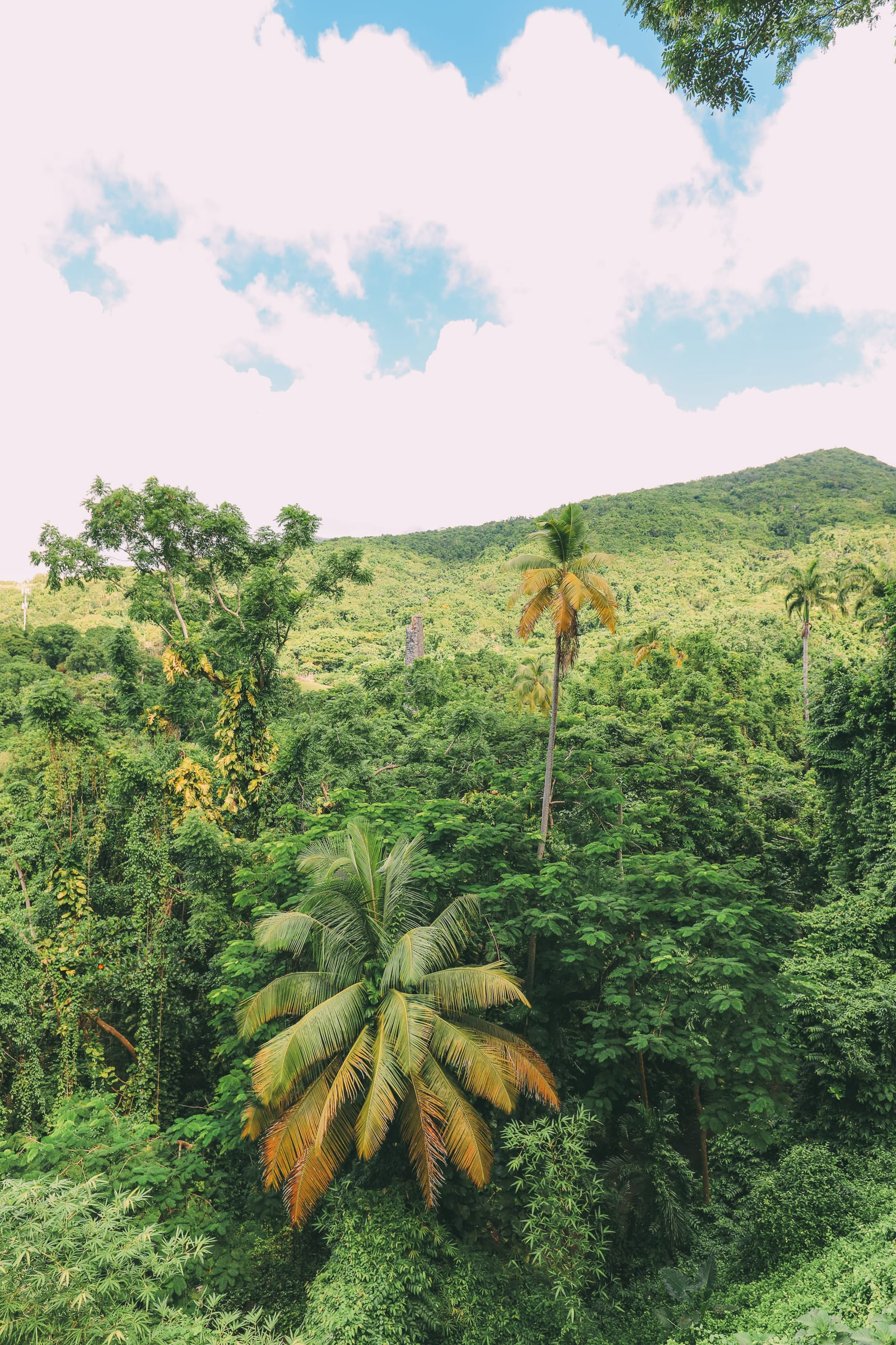 First Impressions Of The Island Of St Kitts (44)