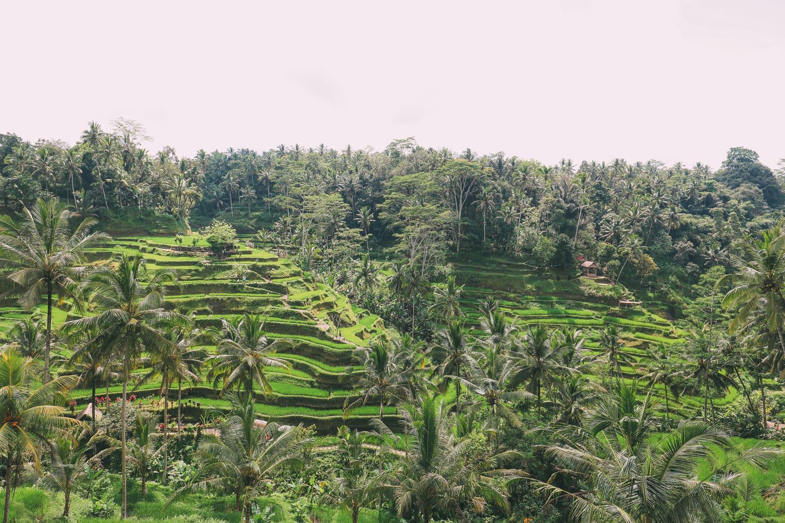 Bali Travel - Tegalalang Rice Terrace In Ubud And Gunung Kawi Temple (2)