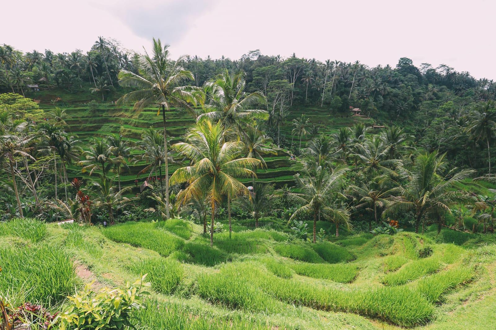 Bali Travel - Tegalalang Rice Terrace In Ubud And Gunung Kawi Temple (4)