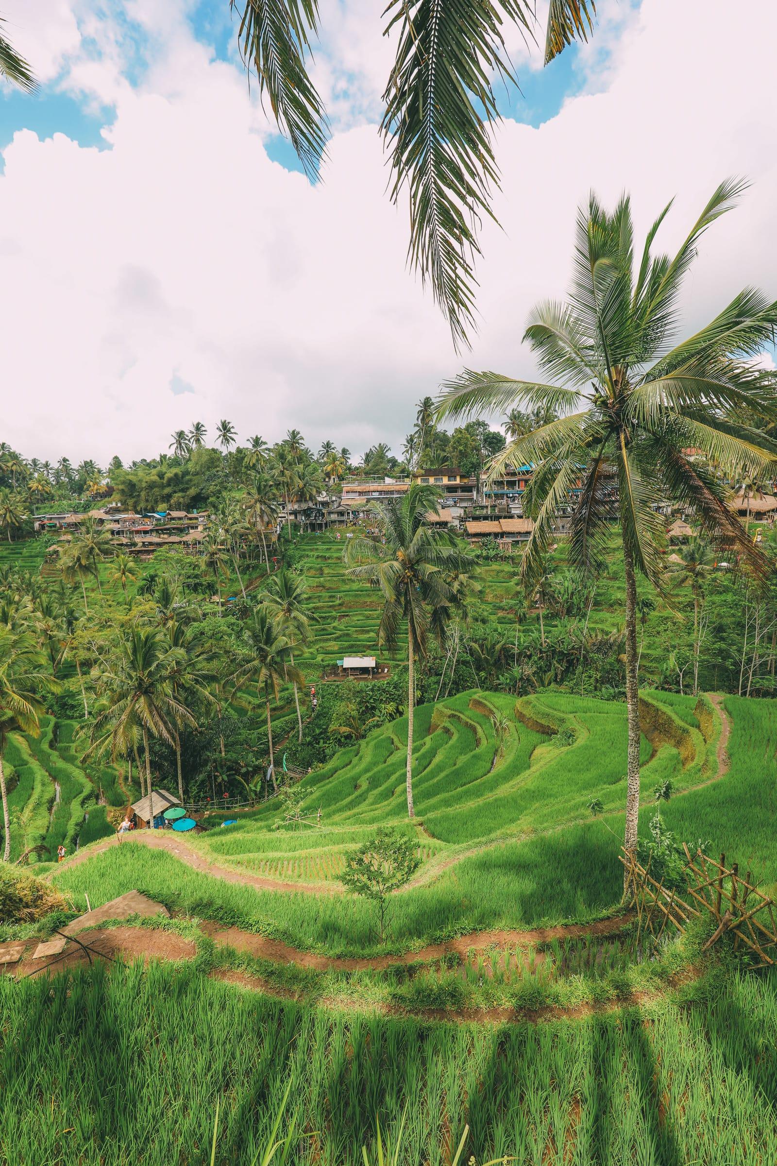 Bali Travel - Tegalalang Rice Terrace In Ubud And Gunung Kawi Temple (15)