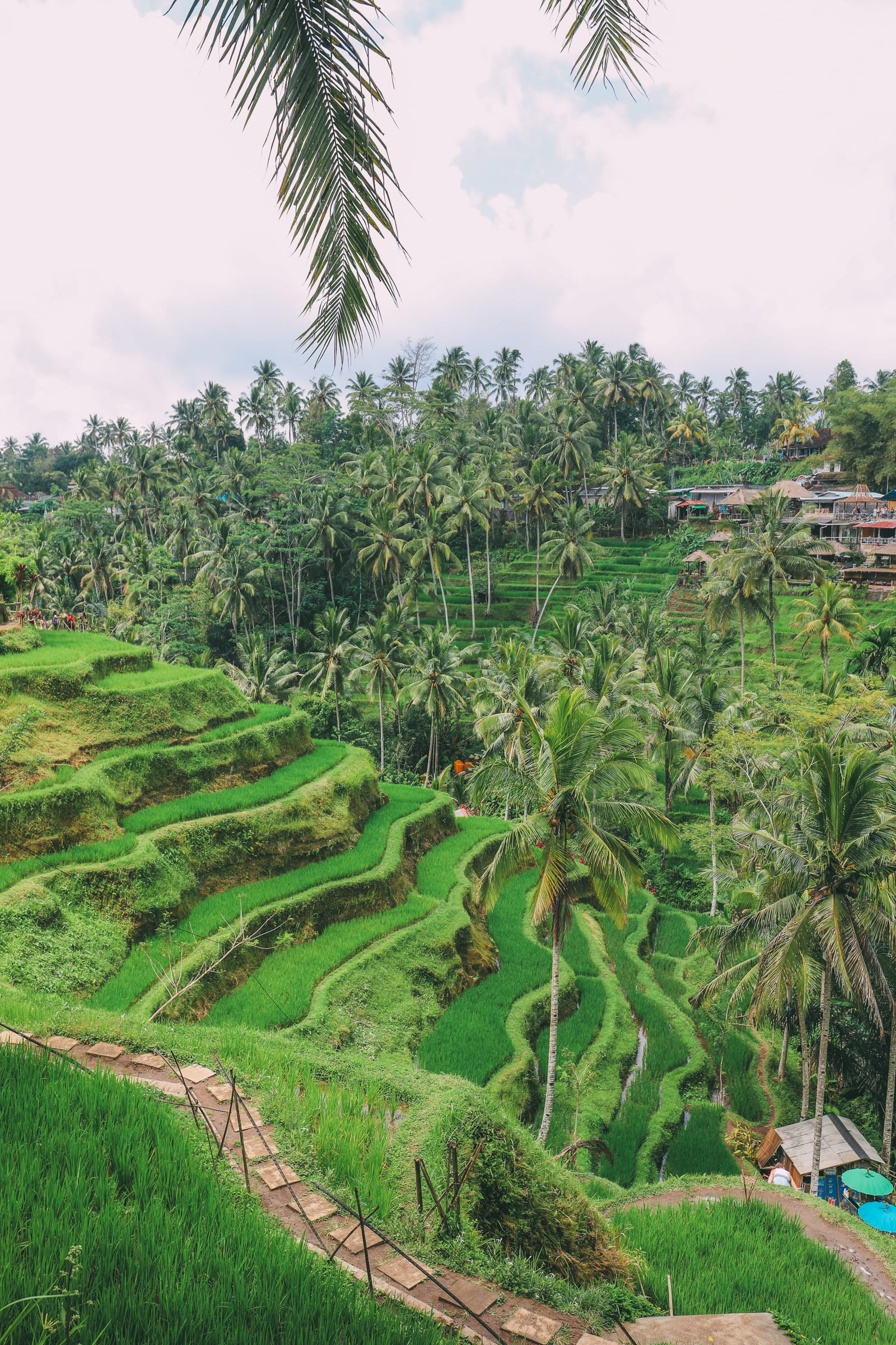 Bali Travel - Tegalalang Rice Terrace In Ubud And Gunung Kawi Temple (16)