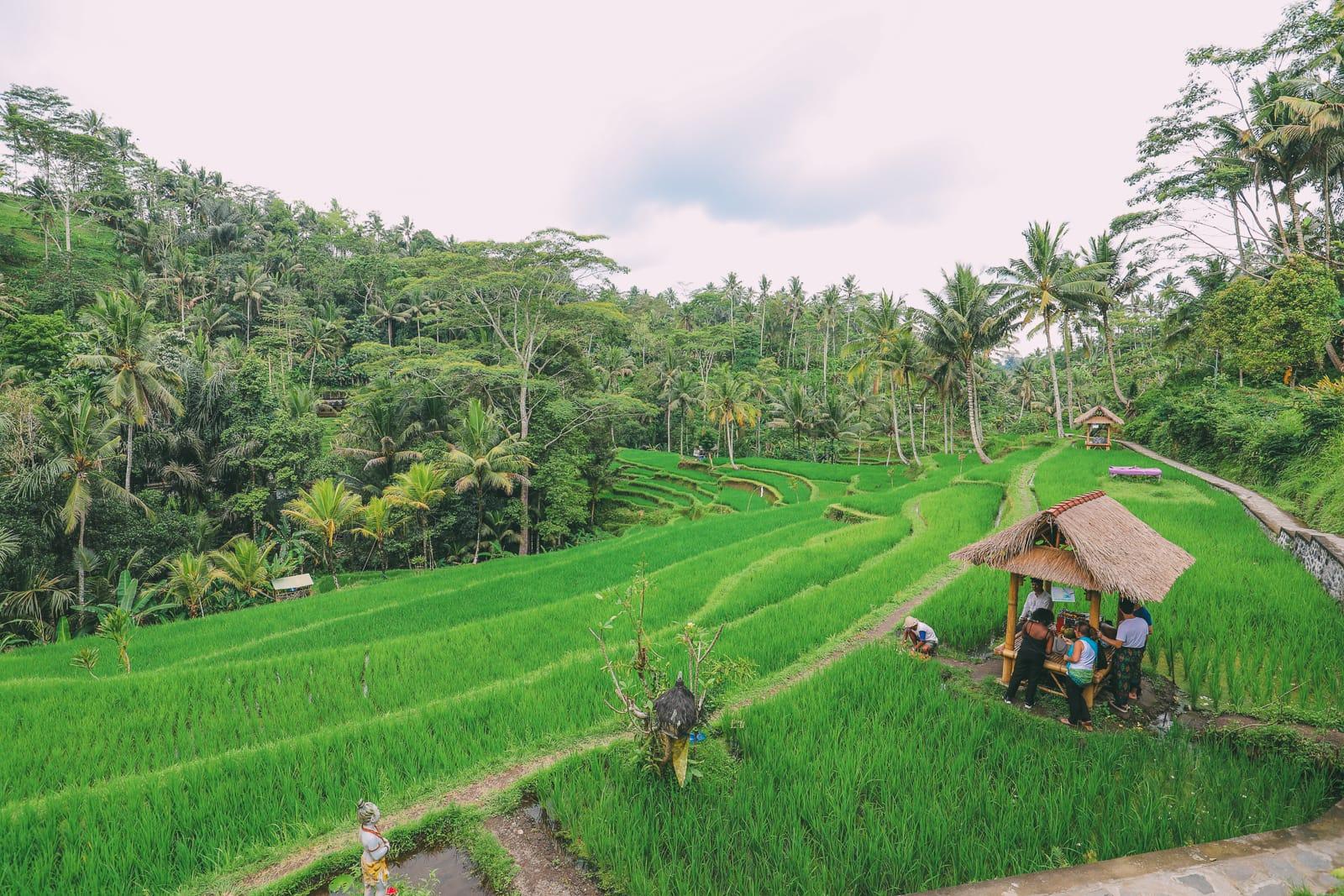 Bali Travel - Tegalalang Rice Terrace In Ubud And Gunung Kawi Temple (26)