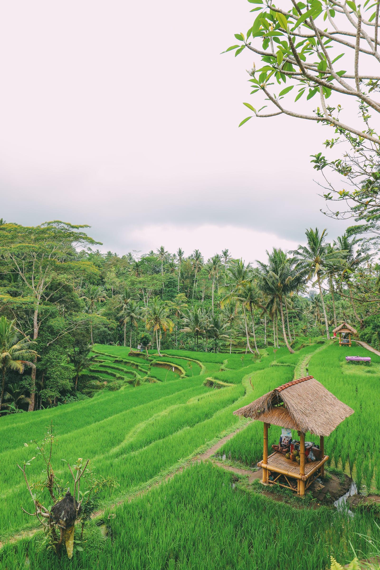 Bali Travel - Tegalalang Rice Terrace In Ubud And Gunung Kawi Temple (47)