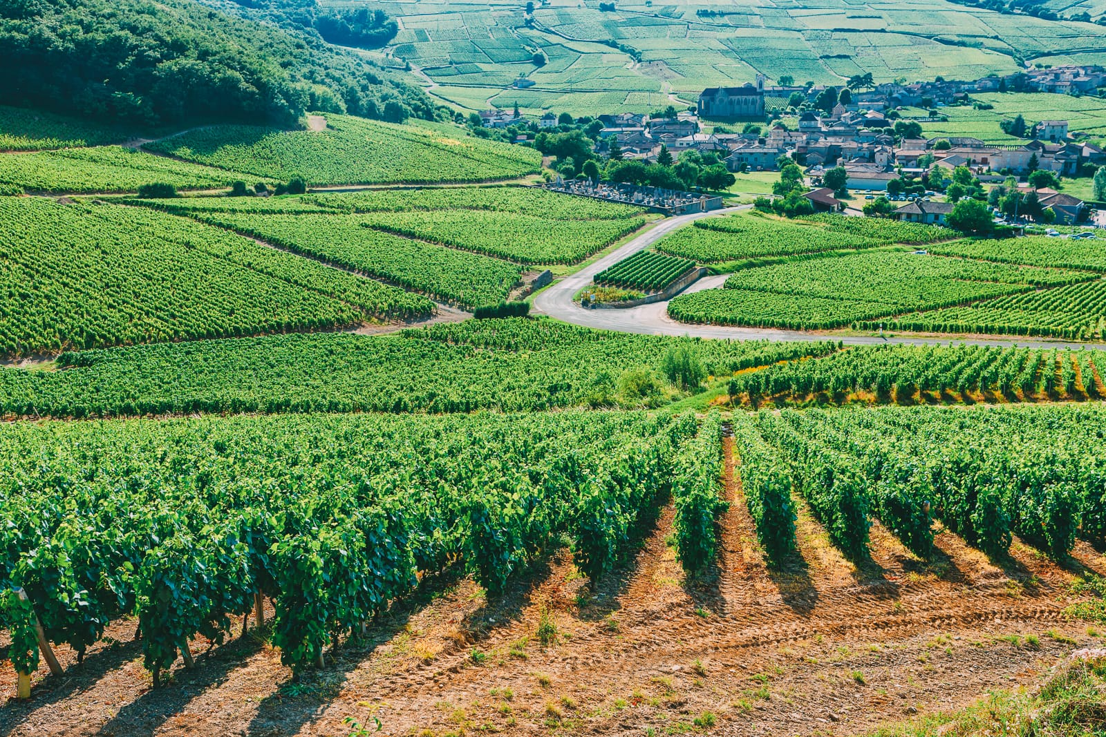 9 Beautiful Wine Regions In France You Need To Holiday In (11)