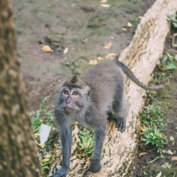 Ubud Monkey Forest In Bali - Things To Know Before You Visit (13)
