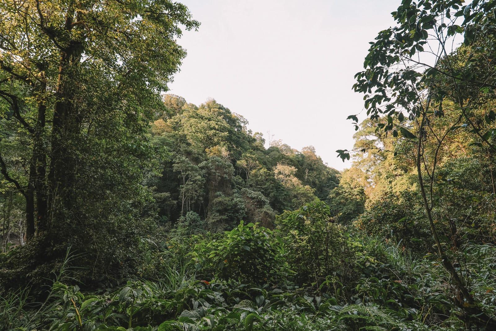 The Amazing Banyumala Twin Waterfalls In The Jungles Of Bali (10)