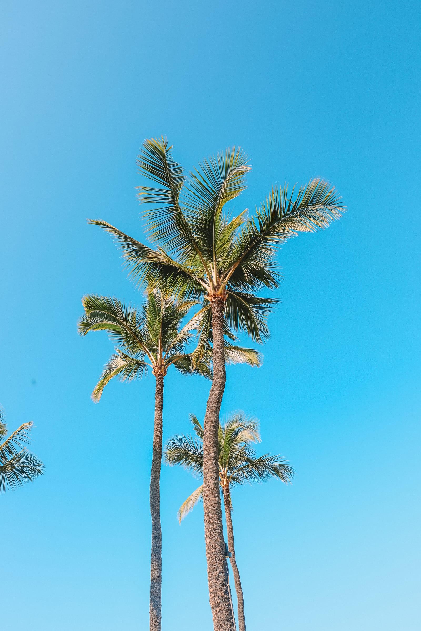 24 Hours In Maui, Hawaii (13)