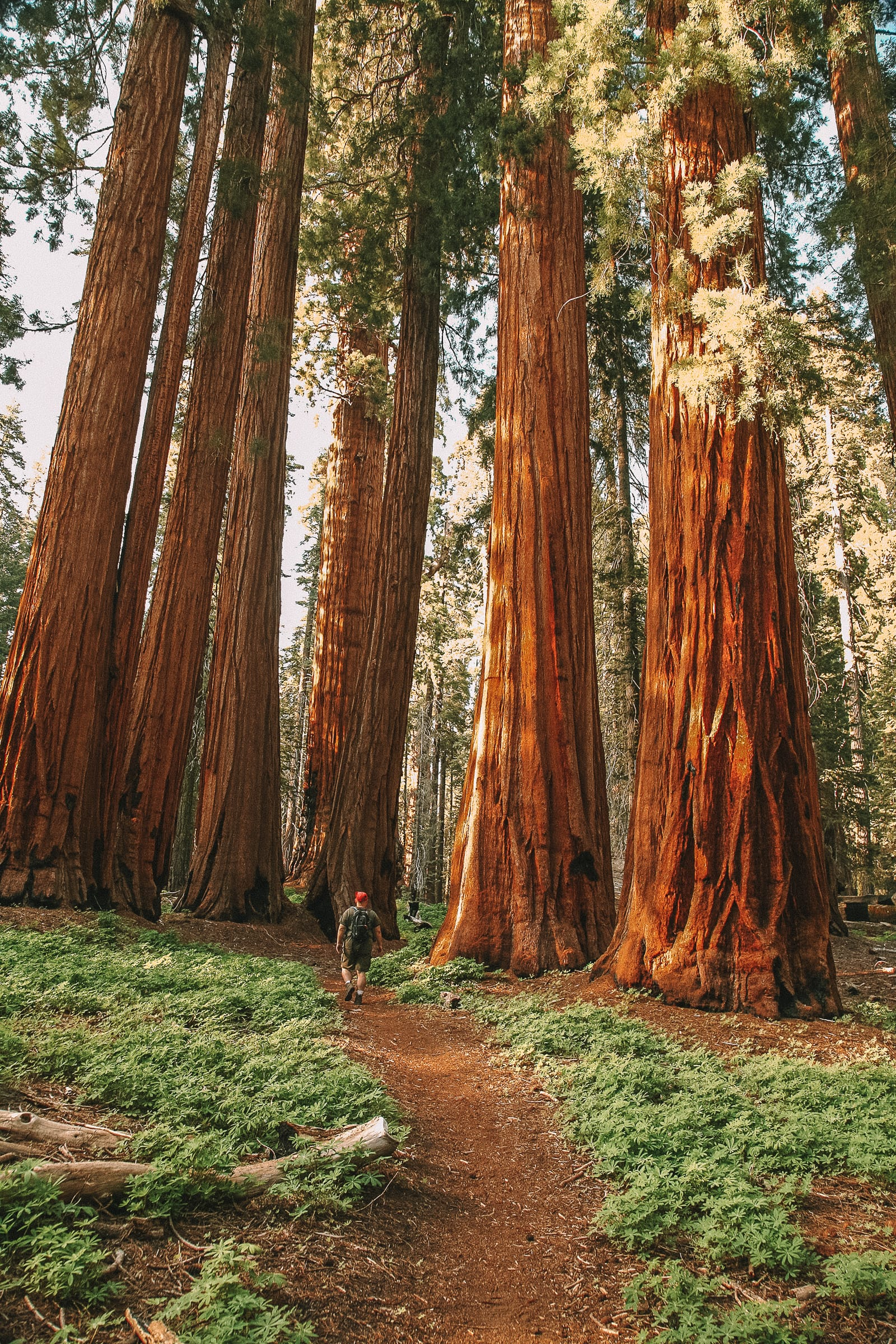 Beautiful National Parks In California To Visit (14)