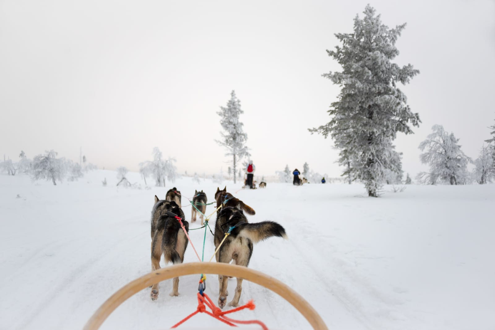 12 Of The Best Things to Do in Lapland, Finland (9)