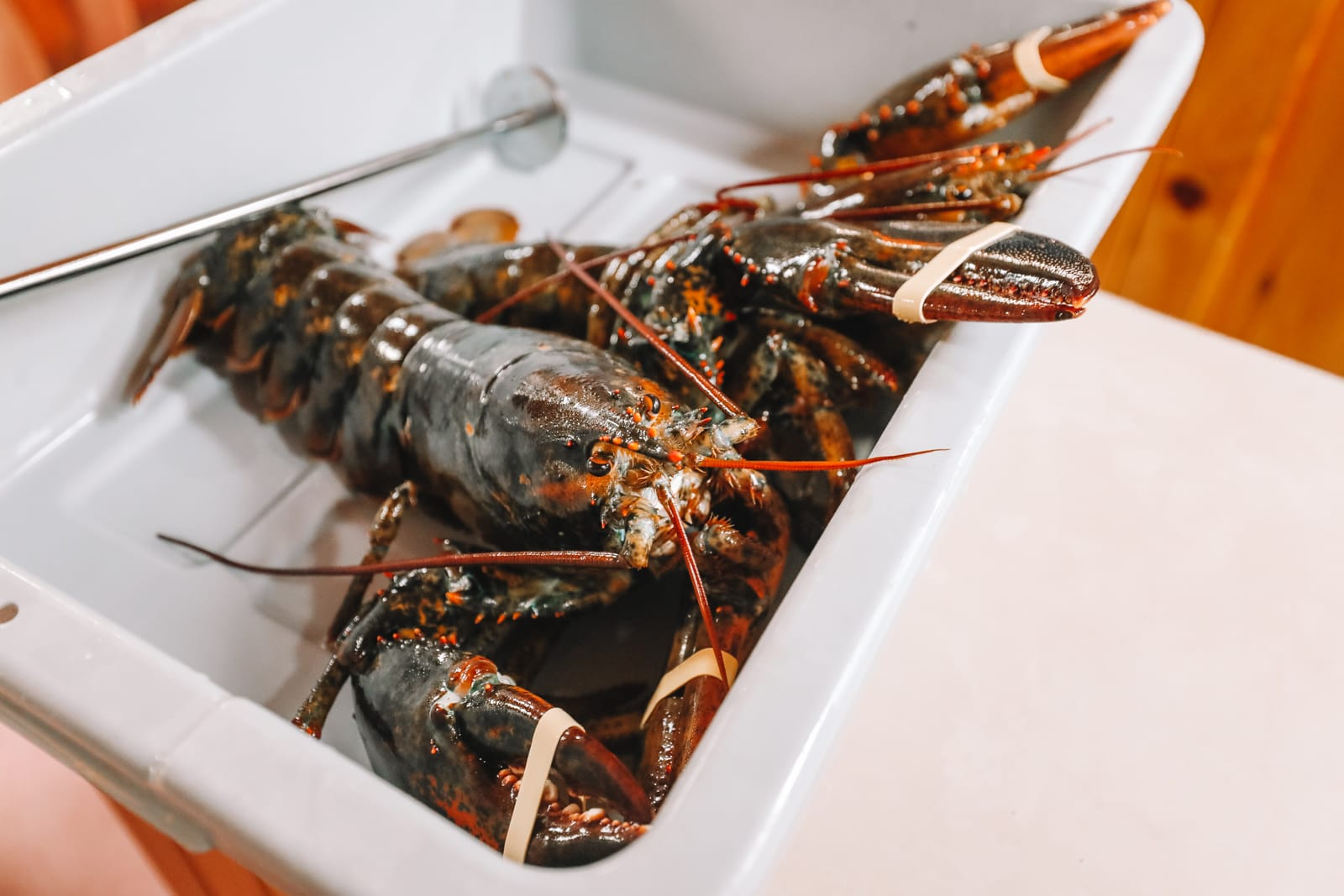 The Lobster Capital Of The World (27)