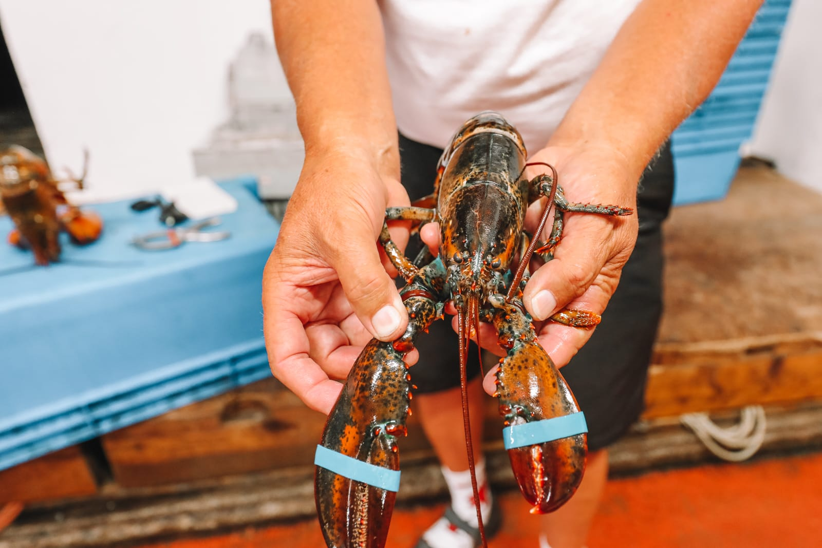 The Lobster Capital Of The World (31)