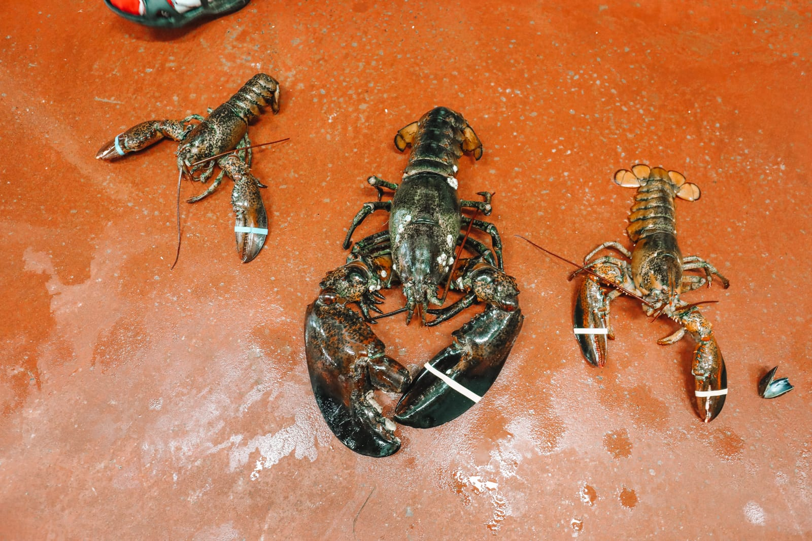 The Lobster Capital Of The World (35)