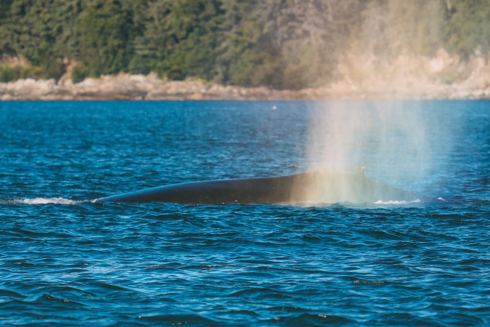 Humpback Whales, Glaciers And Northern Lights – The Most Magical Experience Aboard Celebrity Cruises Solstice To Alaska (14)