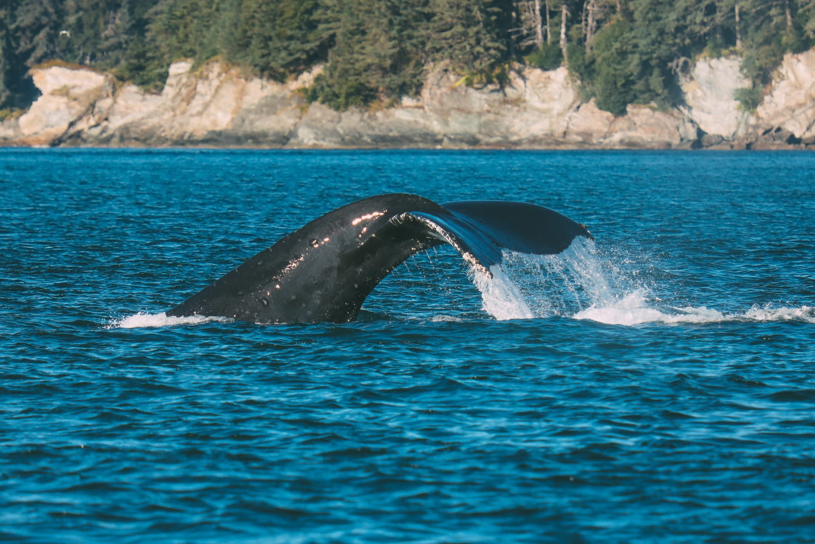 Humpback Whales, Glaciers And Northern Lights – The Most Magical Experience Aboard Celebrity Cruises Solstice To Alaska (15)
