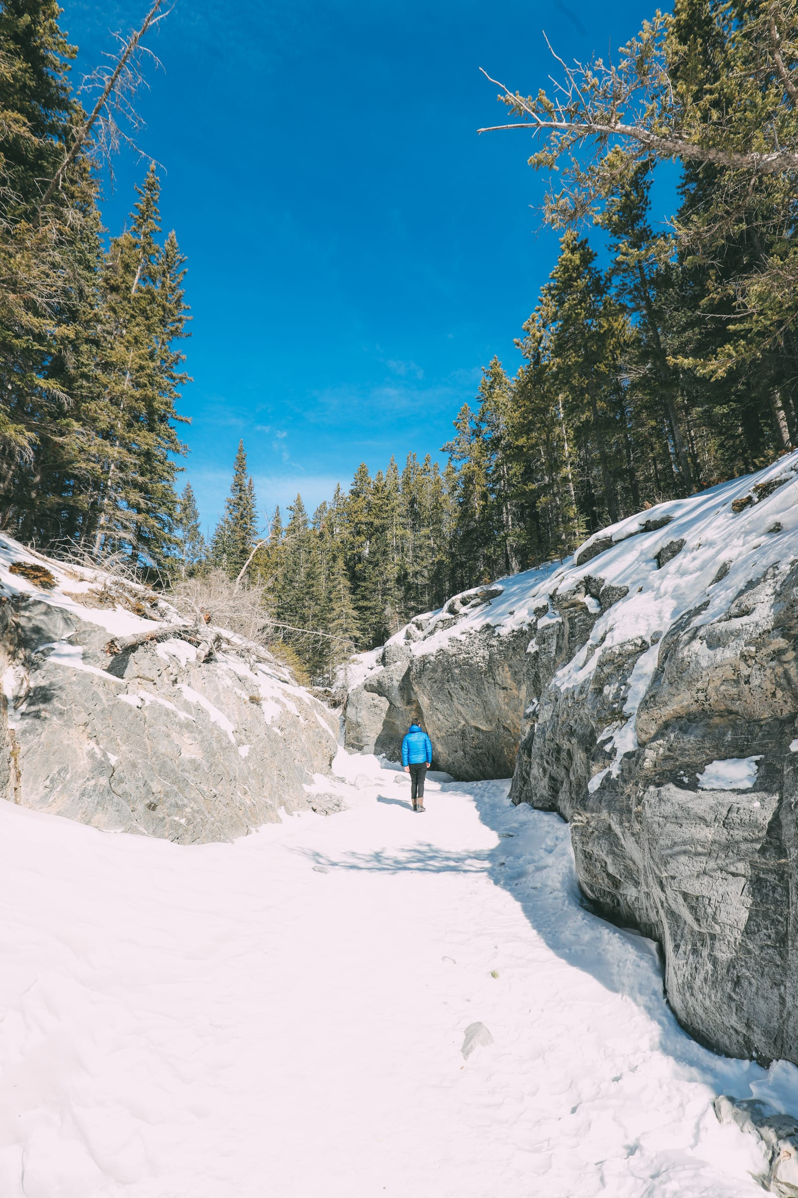 Grotto Canyon, Wolfdogs And The Canadian Rockies (5)