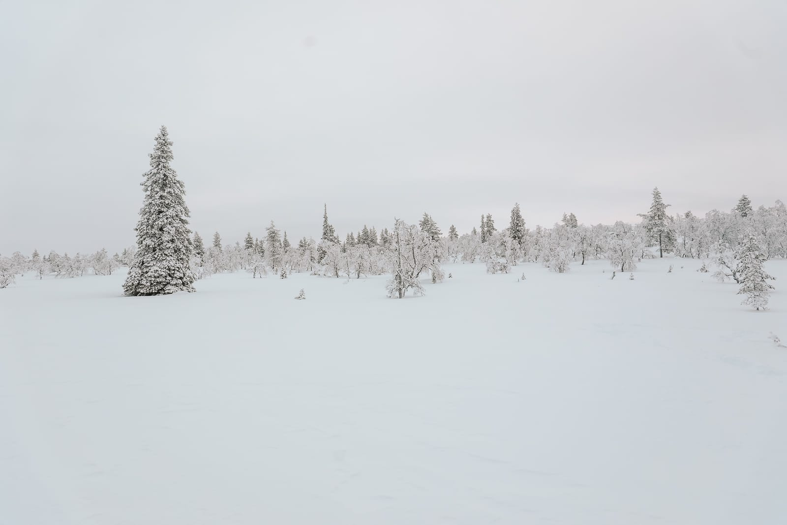 The First 24 Hours In Lapland, Finland (16)