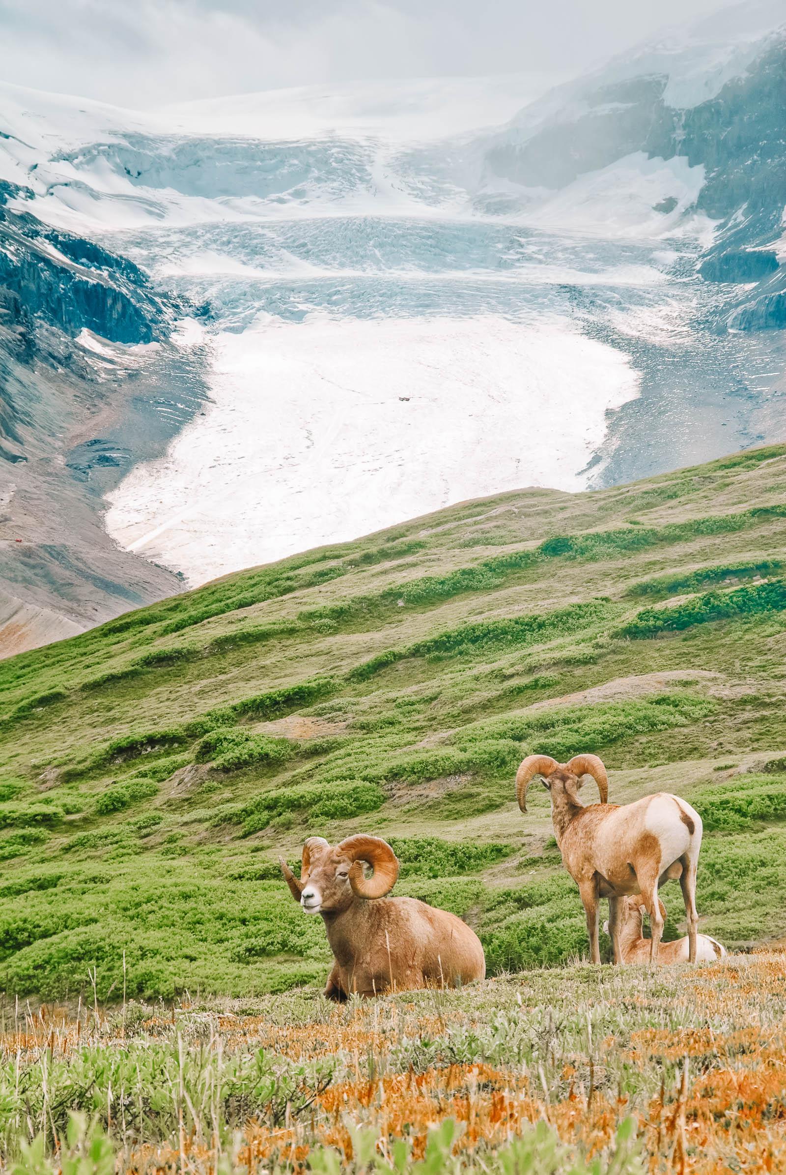 11 Best Hikes In Alberta (4)