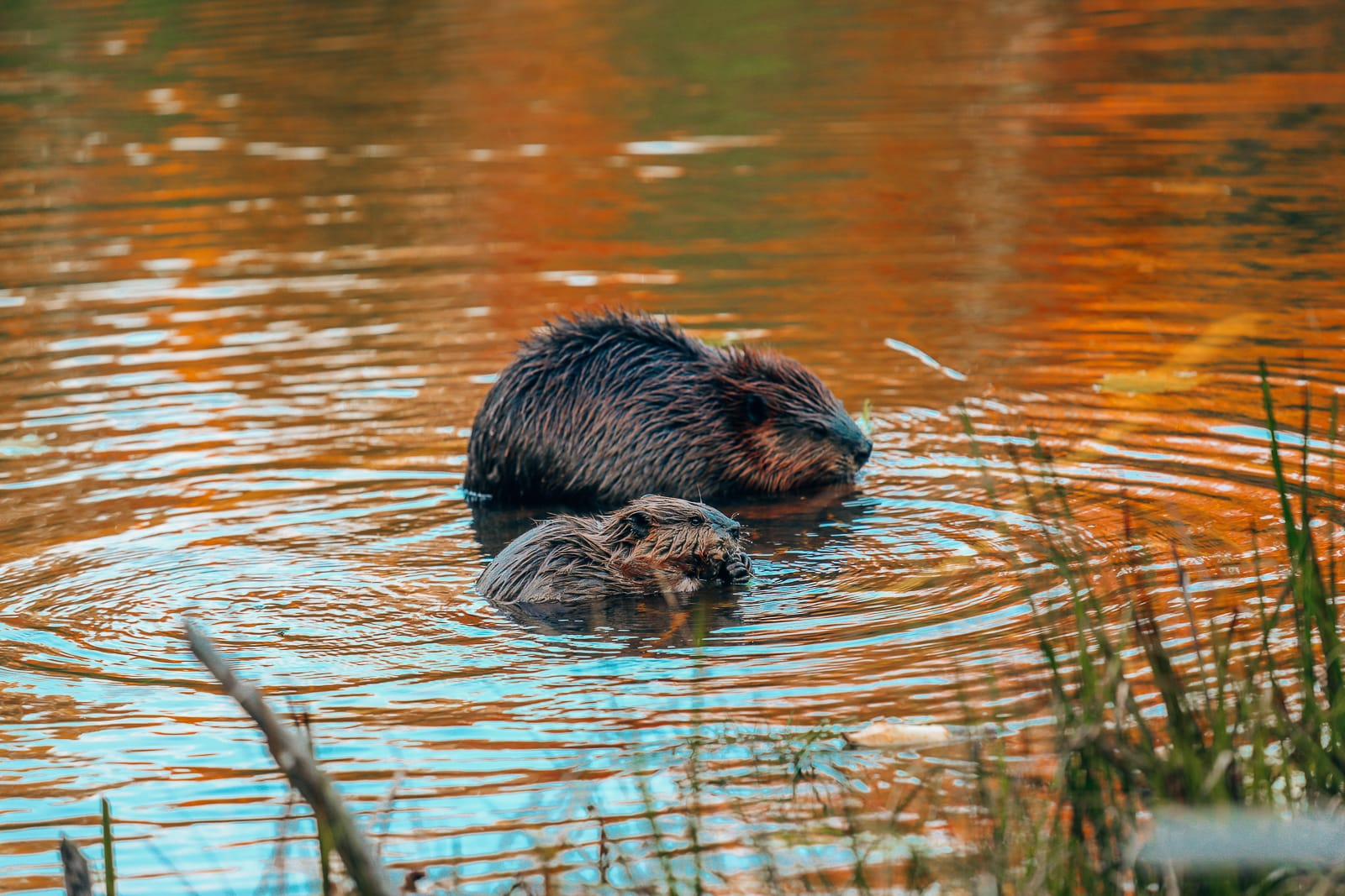 Getting Lost In Nature (And With Beavers) In Quebec, Canada