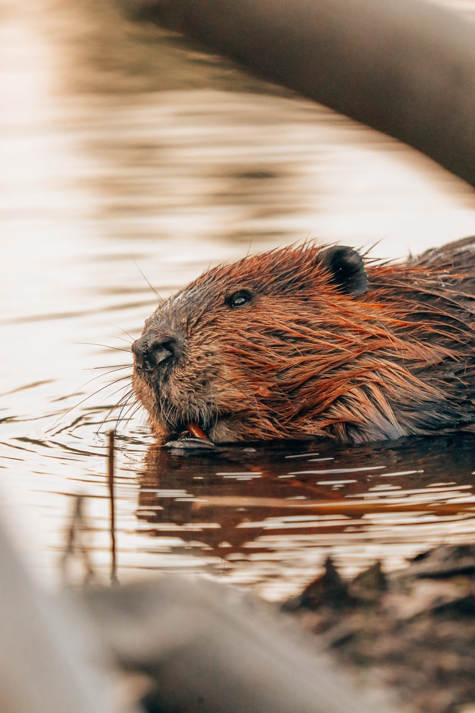 Getting Lost In Nature (And With Beavers) In Quebec, Canada (30)